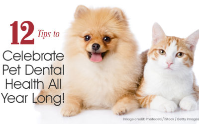 12 Tips to Celebrate Pet Dental Health All Year Long!